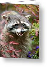 Mad Raccoon Greeting Card