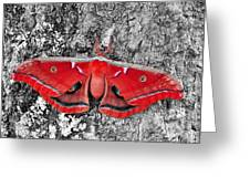 Madam Moth - Red White And Black Greeting Card