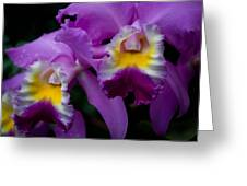 Maddie's Orchid Greeting Card