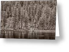 Madison River Yellowstone Bw Greeting Card