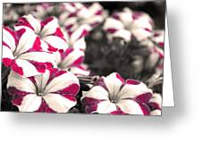 Magenta Flowers Greeting Card