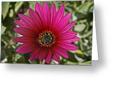 Magenta In Your Face Greeting Card