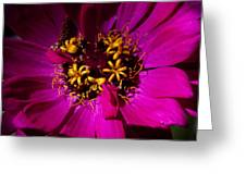 Magenta Light Greeting Card