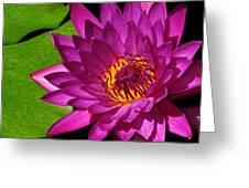 Magenta Waterlily Greeting Card