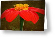 Magenta Zinnia Flower Greeting Card