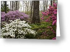 Magical Azaleas At Callaway Botanical Gardens Greeting Card