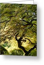 Magical Tree Greeting Card