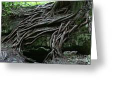 Magical Tree Roots Greeting Card by Chris Hill