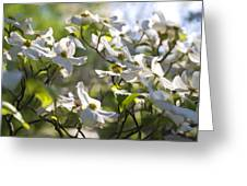 Magical White Flowering Dogwood Blossoms Greeting Card