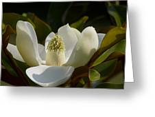 Magnificent Alabama Magnolia Blossom Greeting Card