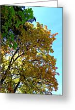 Magnificent Maples Greeting Card