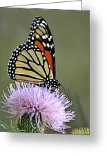 Magnificient Monarch Greeting Card