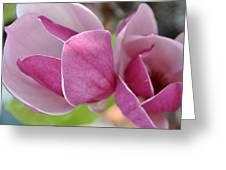 Magnolia Bloom Greeting Card
