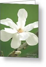Magnolia Blossom I Greeting Card