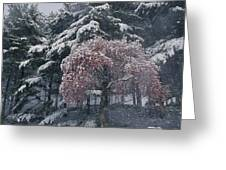 Magnolia Blossoms And Conifers Greeting Card