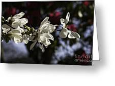 Magnolia Blossoms. Greeting Card