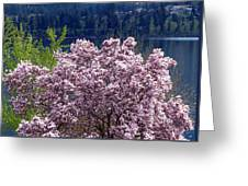 Magnolia By The Lake Greeting Card
