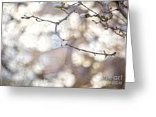 Magnolia Dream Greeting Card