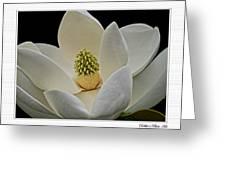 Magnolia I Greeting Card