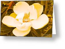 Magnolia In Color Greeting Card by Lorraine Louwerse
