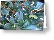 Magnolia Leaves 2 Greeting Card