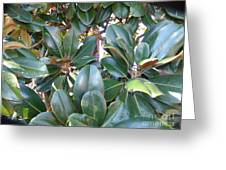 Magnolia Leaves 3 Greeting Card