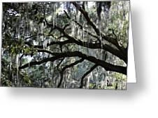Magnolia Meets Live Oak Greeting Card