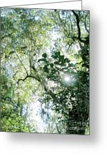 Magnolia Plantation Sc Greeting Card