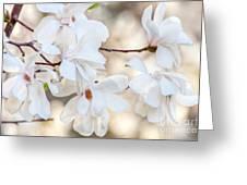 Magnolia Spring Greeting Card