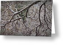 Magnolia Tree Branches Covered With Ice No.3834 Greeting Card