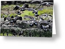 Magpie Geese In Flight Mcminn Lagoon Greeting Card