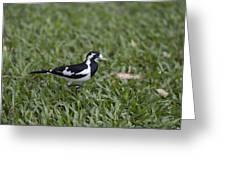 Magpie Lark Greeting Card