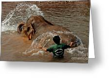 Bathing An Elephant Laos Greeting Card