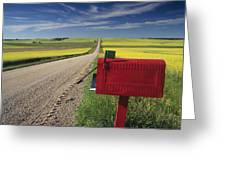 Mailbox On Country Road, Tiger Hills Greeting Card