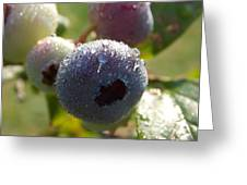 Maine Blueberries Greeting Card