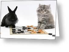 Maine Coon Kitten And Black Rabbit Greeting Card