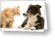 Maine Coon Kitten And Mongrel Dog Greeting Card