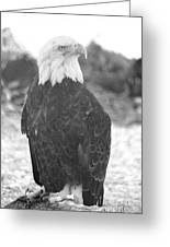 Majestic Black And White Greeting Card
