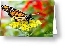 Majestic Monarch Greeting Card