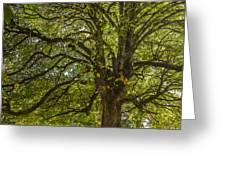 Majestic Tree Greeting Card