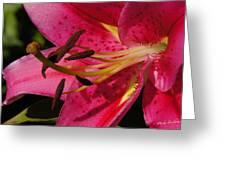 Major Big Bloom Greeting Card