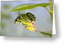 Malachite Butterfly On Leaf Greeting Card
