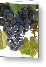Malbec Grapes On The Vine Greeting Card