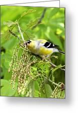 Male American Goldfinch 9245-i Greeting Card