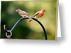 Male And Female House Finch Greeting Card