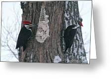 Male And Female Pileated Woodpeckers Greeting Card