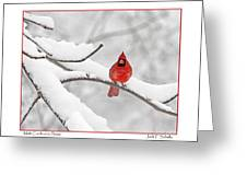 Male Cardinal In Snow Greeting Card