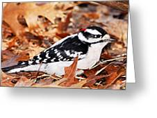 Male Downy Woodpecker 4 Greeting Card
