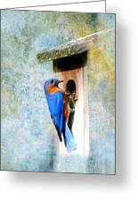 Male Eastern Bluebird At Nesting Box Greeting Card