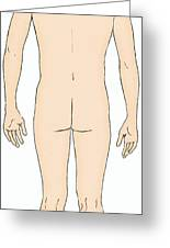 Male, Full Posterior View Greeting Card